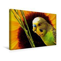 Premium Textil-Leinwand 45 x 30 cm Quer-Format Naturwellensittich | Wandbild, HD-Bild auf Keilrahmen, Fertigbild auf hochwertigem Vlies, Leinwanddruck von Björn Bergmann von Bergmann,  Björn
