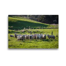 Premium Textil-Leinwand 45 x 30 cm Quer-Format Neuseeländische Schafsherde | Wandbild, HD-Bild auf Keilrahmen, Fertigbild auf hochwertigem Vlies, Leinwanddruck von Art is Passion Photodesign by Silvia Höld