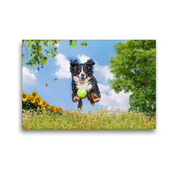 Premium Textil-Leinwand 45 x 30 cm Quer-Format Nur fliegen ist schöner | Wandbild, HD-Bild auf Keilrahmen, Fertigbild auf hochwertigem Vlies, Leinwanddruck von Sigrid Starick