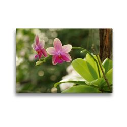 Premium Textil-Leinwand 45 x 30 cm Quer-Format Orchidee rosé | Wandbild, HD-Bild auf Keilrahmen, Fertigbild auf hochwertigem Vlies, Leinwanddruck von Bianca Schumann