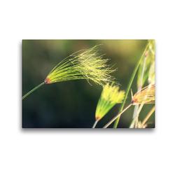 Premium Textil-Leinwand 45 x 30 cm Quer-Format Papyrusgras, Okavango-Delta, Botswana | Wandbild, HD-Bild auf Keilrahmen, Fertigbild auf hochwertigem Vlies, Leinwanddruck von Birgit Scharnhorst