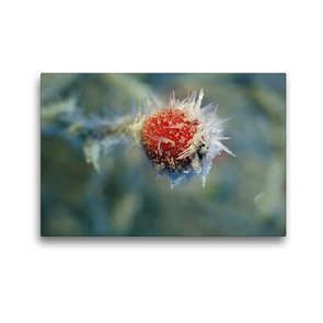 Premium Textil-Leinwand 45 x 30 cm Quer-Format Perpetual winter Dreams by Tanja Riedel | Wandbild, HD-Bild auf Keilrahmen, Fertigbild auf hochwertigem Vlies, Leinwanddruck von N N
