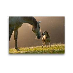 Premium Textil-Leinwand 45 x 30 cm Quer-Format Pferd und Hund im September Nebel | Wandbild, HD-Bild auf Keilrahmen, Fertigbild auf hochwertigem Vlies, Leinwanddruck von Meike Bölts