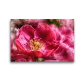 Premium Textil-Leinwand 45 x 30 cm Quer-Format Pinkfarbene Rosenblüte mit Textur   Wandbild, HD-Bild auf Keilrahmen, Fertigbild auf hochwertigem Vlies, Leinwanddruck von Nicc Koch