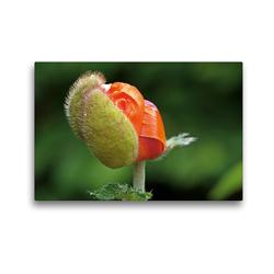 Premium Textil-Leinwand 45 x 30 cm Quer-Format Rosen und Mohnblüten Momente Schweizer Edition | Wandbild, HD-Bild auf Keilrahmen, Fertigbild auf hochwertigem Vlies, Leinwanddruck von Avianaarts Design Fotografie by Tanja Riedel