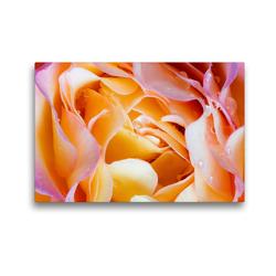 Premium Textil-Leinwand 45 x 30 cm Quer-Format Rosenblütenblätter mit Wassertropfen | Wandbild, HD-Bild auf Keilrahmen, Fertigbild auf hochwertigem Vlies, Leinwanddruck von Xenia Schlossherr