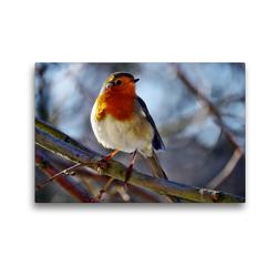 Premium Textil-Leinwand 45 x 30 cm Quer-Format Rotkehlchen   Wandbild, HD-Bild auf Keilrahmen, Fertigbild auf hochwertigem Vlies, Leinwanddruck von Sabine Löwer