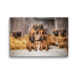 Premium Textil-Leinwand 45 x 30 cm Quer-Format Scheunenfest   Wandbild, HD-Bild auf Keilrahmen, Fertigbild auf hochwertigem Vlies, Leinwanddruck von Sonja Tessen