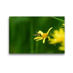 Premium Textil-Leinwand 45 x 30 cm Quer-Format Schwebfliege auf gelber Blüte | Wandbild, HD-Bild auf Keilrahmen, Fertigbild auf hochwertigem Vlies, Leinwanddruck von Marlise Gaudig