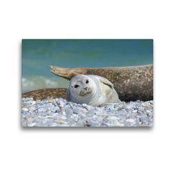 Premium Textil-Leinwand 45 x 30 cm Quer-Format Seehundbaby | Wandbild, HD-Bild auf Keilrahmen, Fertigbild auf hochwertigem Vlies, Leinwanddruck von Kattobello