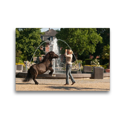 Premium Textil-Leinwand 45 x 30 cm Quer-Format Shetlandpony Kim und Claudia Miller | Wandbild, HD-Bild auf Keilrahmen, Fertigbild auf hochwertigem Vlies, Leinwanddruck von Meike Bölts