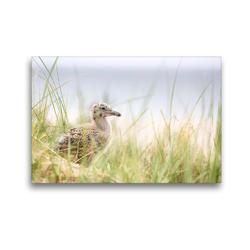 Premium Textil-Leinwand 45 x 30 cm Quer-Format Silbermöwenbaby | Wandbild, HD-Bild auf Keilrahmen, Fertigbild auf hochwertigem Vlies, Leinwanddruck von N N