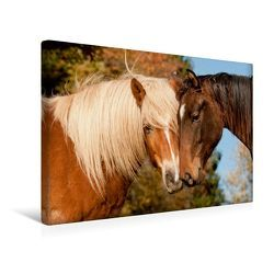 Premium Textil-Leinwand 45 x 30 cm Quer-Format Sonnige Tage auf der Weide   Wandbild, HD-Bild auf Keilrahmen, Fertigbild auf hochwertigem Vlies, Leinwanddruck von Meike Bölts