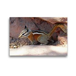 Premium Textil-Leinwand 45 x 30 cm Quer-Format Streifenhörnchen im Zion Nationalpark (USA)   Wandbild, HD-Bild auf Keilrahmen, Fertigbild auf hochwertigem Vlies, Leinwanddruck von Jana Thiem-Eberitsch