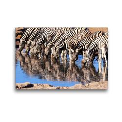 Premium Textil-Leinwand 45 x 30 cm Quer-Format Trinkende Zebras im südlichen Afrika | Wandbild, HD-Bild auf Keilrahmen, Fertigbild auf hochwertigem Vlies, Leinwanddruck von Birgit Scharnhorst