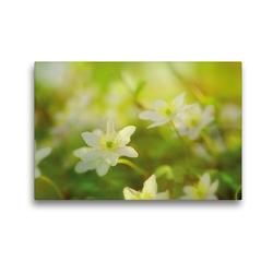 Premium Textil-Leinwand 45 x 30 cm Quer-Format Waldboden im Frühjahr | Wandbild, HD-Bild auf Keilrahmen, Fertigbild auf hochwertigem Vlies, Leinwanddruck von Avianaarts Design Fotografie by Tanja Riedel