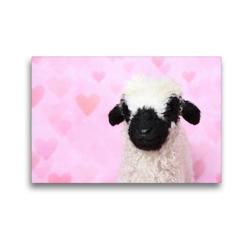 Premium Textil-Leinwand 45 x 30 cm Quer-Format Walliser Schwarznasenschaf | Wandbild, HD-Bild auf Keilrahmen, Fertigbild auf hochwertigem Vlies, Leinwanddruck von Jeanette Hutfluss
