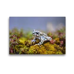 Premium Textil-Leinwand 45 x 30 cm Quer-Format Wechselkröte | Wandbild, HD-Bild auf Keilrahmen, Fertigbild auf hochwertigem Vlies, Leinwanddruck von GUGIGEI