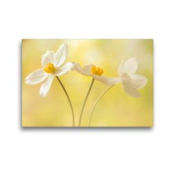 Premium Textil-Leinwand 45 x 30 cm Quer-Format Weiße Blumen – Anemonen | Wandbild, HD-Bild auf Keilrahmen, Fertigbild auf hochwertigem Vlies, Leinwanddruck von Ulrike Adam