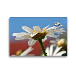 Premium Textil-Leinwand 45 x 30 cm Quer-Format Weiße Margerite mit Wassertropfen | Wandbild, HD-Bild auf Keilrahmen, Fertigbild auf hochwertigem Vlies, Leinwanddruck von Susanne Herppich