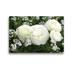 Premium Textil-Leinwand 45 x 30 cm Quer-Format Weiße Ranunkeln und Vergissmeinnicht | Wandbild, HD-Bild auf Keilrahmen, Fertigbild auf hochwertigem Vlies, Leinwanddruck von Gisela Kruse