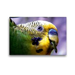 Premium Textil-Leinwand 45 x 30 cm Quer-Format Wellensittichkalender mit Tipps zur artgerechten Ernährung | Wandbild, HD-Bild auf Keilrahmen, Fertigbild auf hochwertigem Vlies, Leinwanddruck von Björn Bergmann