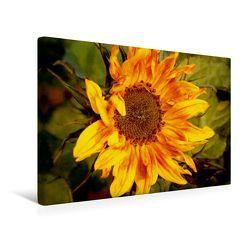 Premium Textil-Leinwand 45 x 30 cm Quer-Format Wilde Sonnenblume   Wandbild, HD-Bild auf Keilrahmen, Fertigbild auf hochwertigem Vlies, Leinwanddruck von Heike Hultsch von Hultsch,  Heike