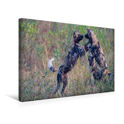 Premium Textil-Leinwand 45 x 30 cm Quer-Format Wildhunde | Wandbild, HD-Bild auf Keilrahmen, Fertigbild auf hochwertigem Vlies, Leinwanddruck von Robert Styppa von Styppa,  Robert