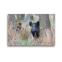 Premium Textil-Leinwand 45 x 30 cm Quer-Format Wildschwein in heimischer Natur | Wandbild, HD-Bild auf Keilrahmen, Fertigbild auf hochwertigem Vlies, Leinwanddruck von Michael Breuer