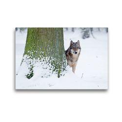 Premium Textil-Leinwand 45 x 30 cm Quer-Format Wolf im Winter   Wandbild, HD-Bild auf Keilrahmen, Fertigbild auf hochwertigem Vlies, Leinwanddruck von Wilfried Martin