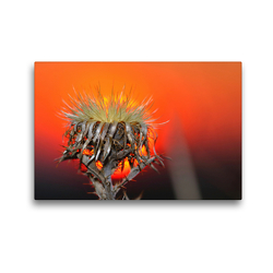 Premium Textil-Leinwand 45 x 30 cm Quer-Format wundervolle Abendstimmung | Wandbild, HD-Bild auf Keilrahmen, Fertigbild auf hochwertigem Vlies, Leinwanddruck von Michis Fotogalerie