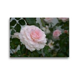 Premium Textil-Leinwand 45 x 30 cm Quer-Format Zarte Schönheiten – Bezaubernde Rosenblüten | Wandbild, HD-Bild auf Keilrahmen, Fertigbild auf hochwertigem Vlies, Leinwanddruck von Bianca Schumann