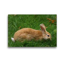 Premium Textil-Leinwand 45 x 30 cm Quer-Format Zwergkaninchen beim Dinner | Wandbild, HD-Bild auf Keilrahmen, Fertigbild auf hochwertigem Vlies, Leinwanddruck von Kattobello