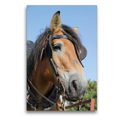 Premium Textil-Leinwand 50 x 75 cm Hoch-Format Ardenner-Porträt | Wandbild, HD-Bild auf Keilrahmen, Fertigbild auf hochwertigem Vlies, Leinwanddruck von Antje Lindert-Rottke