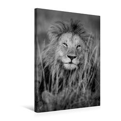 Premium Textil-Leinwand 50 x 75 cm Hoch-Format FineArt in Black and White: Der König der Löwen | Wandbild, HD-Bild auf Keilrahmen, Fertigbild auf hochwertigem Vlies, Leinwanddruck von Ingo Gerlach von Gerlach,  Ingo