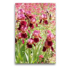 Premium Textil-Leinwand 50 x 75 cm Hoch-Format Iris und Rote Spornblume | Wandbild, HD-Bild auf Keilrahmen, Fertigbild auf hochwertigem Vlies, Leinwanddruck von Gisela Kruse