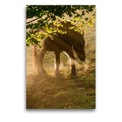 Premium Textil-Leinwand 50 x 75 cm Hoch-Format Kaltblut in Märchenlicht | Wandbild, HD-Bild auf Keilrahmen, Fertigbild auf hochwertigem Vlies, Leinwanddruck von Meike Bölts