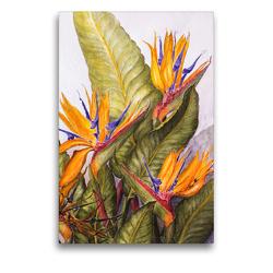 Premium Textil-Leinwand 50 x 75 cm Hoch-Format Madeira,Quinta Splendida: Paradiesvogelblume (Strelitzia reginae) | Wandbild, HD-Bild auf Keilrahmen, Fertigbild auf hochwertigem Vlies, Leinwanddruck von Annemarie Meindl