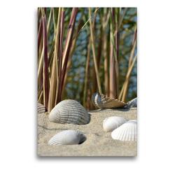 Premium Textil-Leinwand 50 x 75 cm Hoch-Format Muscheln | Wandbild, HD-Bild auf Keilrahmen, Fertigbild auf hochwertigem Vlies, Leinwanddruck von Susanne Herppich