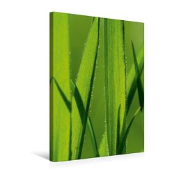 Premium Textil-Leinwand 50 x 75 cm Hoch-Format Naturschönheiten | Wandbild, HD-Bild auf Keilrahmen, Fertigbild auf hochwertigem Vlies, Leinwanddruck von Gabi Siebenhühner