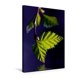 Premium Textil-Leinwand 50 x 75 cm Hoch-Format Naturschönheiten | Wandbild, HD-Bild auf Keilrahmen, Fertigbild auf hochwertigem Vlies, Leinwanddruck von Gabi Siebenhühner von Siebenhühner,  Gabi