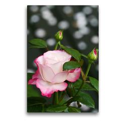 Premium Textil-Leinwand 50 x 75 cm Hoch-Format Rosa 'Nostalgie' | Wandbild, HD-Bild auf Keilrahmen, Fertigbild auf hochwertigem Vlies, Leinwanddruck von Gisela Kruse