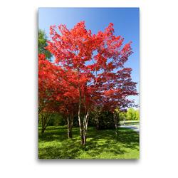 Premium Textil-Leinwand 50 x 75 cm Hoch-Format Schöne Bäume in Hochformat | Wandbild, HD-Bild auf Keilrahmen, Fertigbild auf hochwertigem Vlies, Leinwanddruck von Christa Kramer