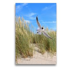 Premium Textil-Leinwand 50 x 75 cm Hoch-Format Seeschwalbe | Wandbild, HD-Bild auf Keilrahmen, Fertigbild auf hochwertigem Vlies, Leinwanddruck von Susanne Herppich