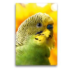 Premium Textil-Leinwand 50 x 75 cm Hoch-Format Wellensittich – Portrait eines grünes Welliküken | Wandbild, HD-Bild auf Keilrahmen, Fertigbild auf hochwertigem Vlies, Leinwanddruck von Björn Bergmann