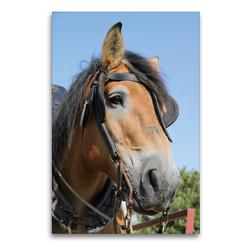 Premium Textil-Leinwand 60 x 90 cm Hoch-Format Ardenner-Porträt | Wandbild, HD-Bild auf Keilrahmen, Fertigbild auf hochwertigem Vlies, Leinwanddruck von Antje Lindert-Rottke