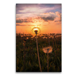 Premium Textil-Leinwand 60 x 90 cm Hoch-Format Auf der Spitze | Wandbild, HD-Bild auf Keilrahmen, Fertigbild auf hochwertigem Vlies, Leinwanddruck von Joseph Schulze