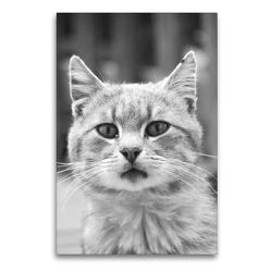 Premium Textil-Leinwand 60 x 90 cm Hoch-Format Der kleine Frechdachs | Wandbild, HD-Bild auf Keilrahmen, Fertigbild auf hochwertigem Vlies, Leinwanddruck von Claudia Schimmack