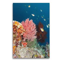Premium Textil-Leinwand 60 x 90 cm Hoch-Format Farbenfrohe Unterwasserwelt | Wandbild, HD-Bild auf Keilrahmen, Fertigbild auf hochwertigem Vlies, Leinwanddruck von Bianca Schumann