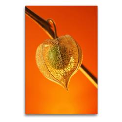Premium Textil-Leinwand 60 x 90 cm Hoch-Format Herbstgruß | Wandbild, HD-Bild auf Keilrahmen, Fertigbild auf hochwertigem Vlies, Leinwanddruck von Dagmar Laimgruber